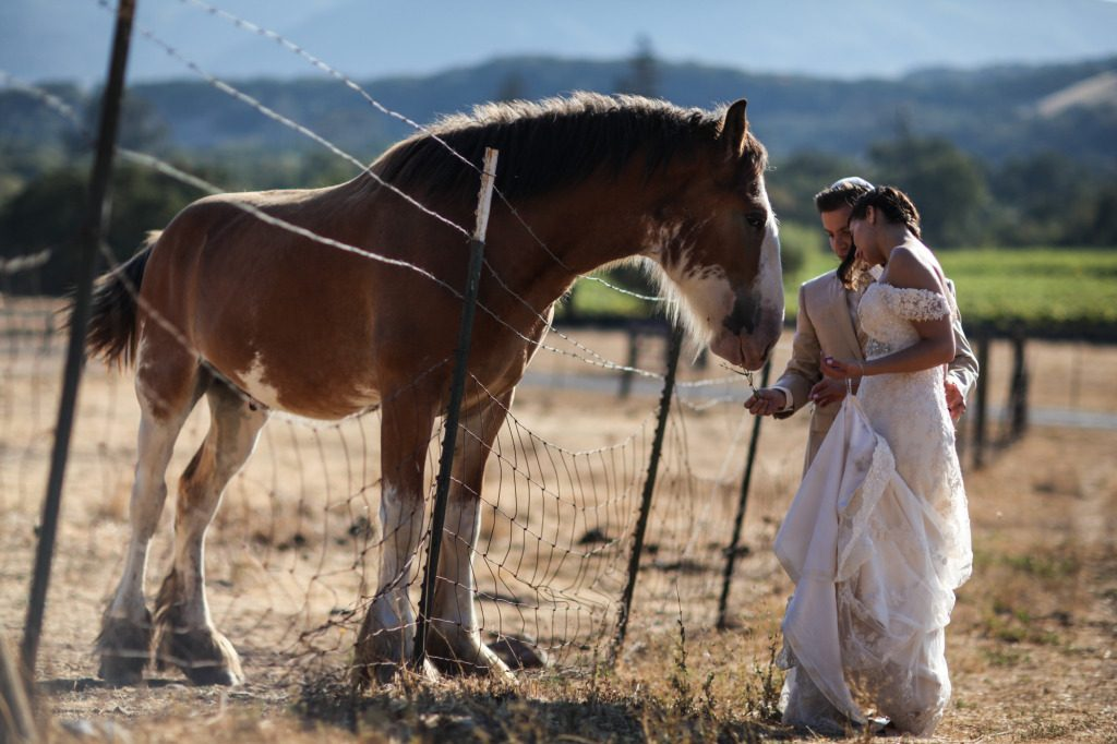Beltane Ranch Wedding | Napa Wedding Photography