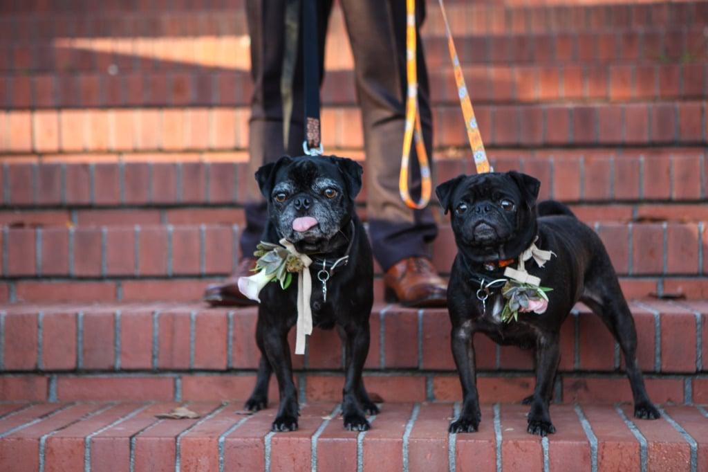 gay-weddings-san-francisco-wedding-photographer-misti-layne_13