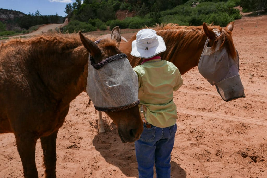 Best Friends Animal Sanctuary Horse Haven