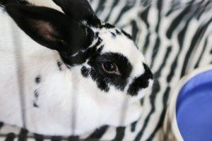 Best Friends Animal Society – Bunny House