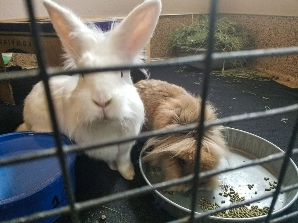 Best Friends Animal Society Bunny House