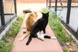 Best Friends Animal Society – Cat World